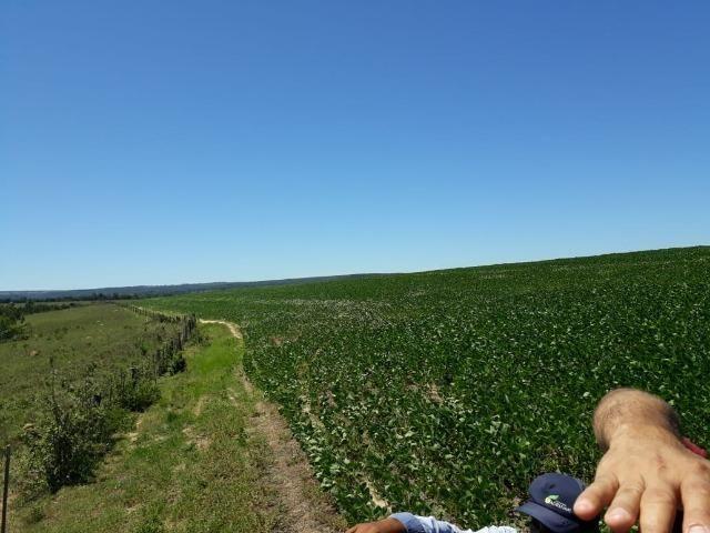 Fazenda c/ 620he, plantando em 200he, 240he em pastagens, Itiquira-MT - Foto 6