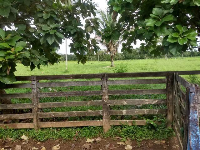 Fazenda com 200he, c/ 50% formado, terra de cultura, 40km de Cuiabá-MT - Foto 12