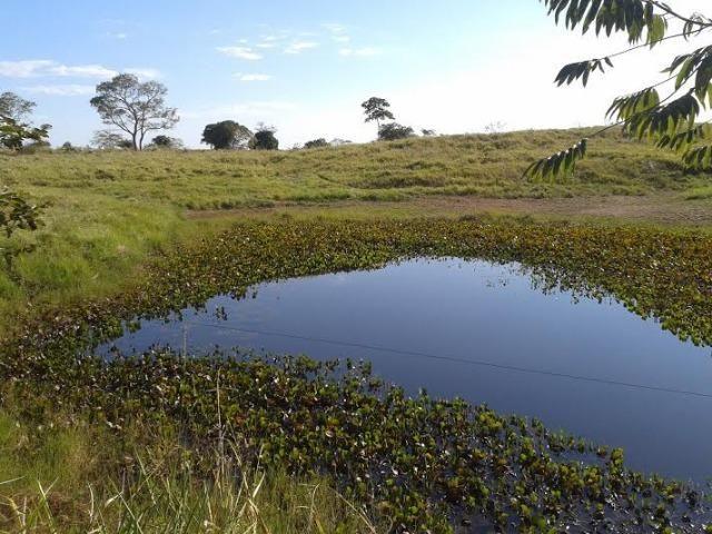 Fazenda com 1.000he c/ 80% formado, 50km de Cuiabá - Foto 5