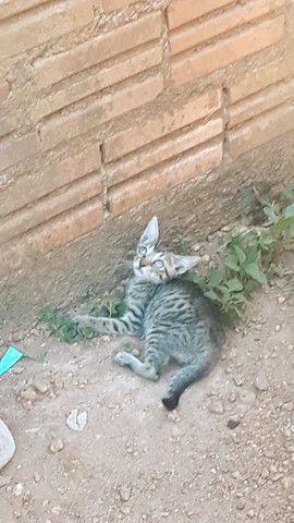 Doam-se gatinhos ?  - Foto 6
