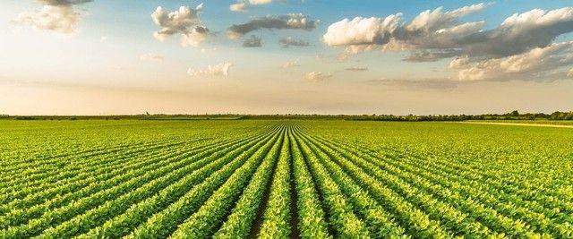 Procuro terras na região de ariguemes para plantio de soja - Foto 2