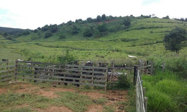 36 hectares na região pingo dagua - Foto 8