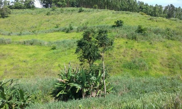 36 hectares na região pingo dagua - Foto 3
