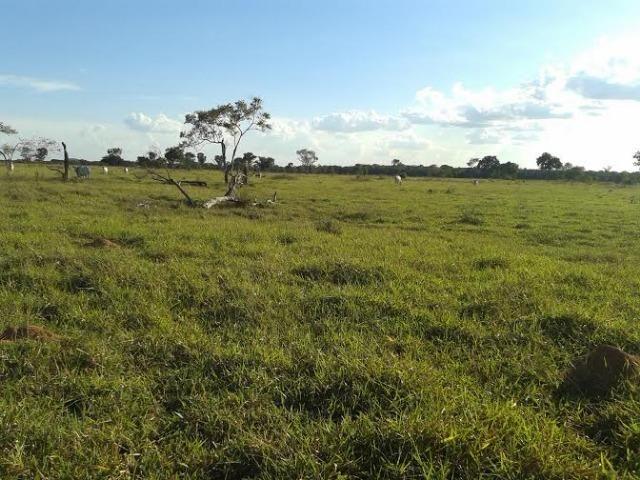 Fazenda c/ 500he c/ 315he formado, a 50km de Cuiabá-MT - Foto 13
