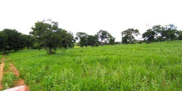 Fazenda com 686he, c/ 350He formado, terra boa, 30km antes Guiratinga-MT - Foto 8