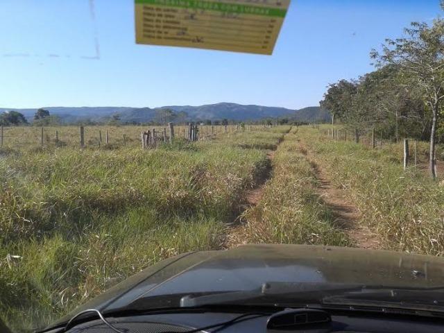 Fazenda com 1.000he c/ 80% formado, 50km de Cuiabá - Foto 6