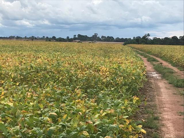 Fazenda 302 Hectares Plantando Lavoura - MT - Foto 7