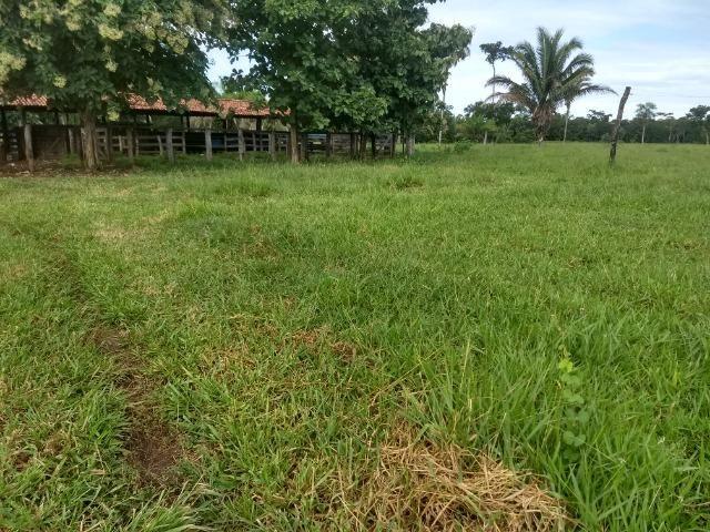 Fazenda com 200he, c/ 50% formado, terra de cultura, 40km de Cuiabá-MT - Foto 6
