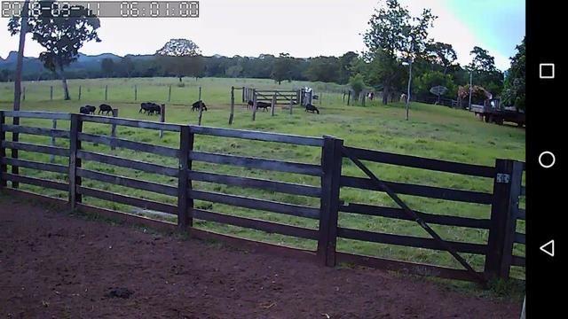 Fazenda com 686he, c/ 350He formado, terra boa, 30km antes Guiratinga-MT - Foto 10