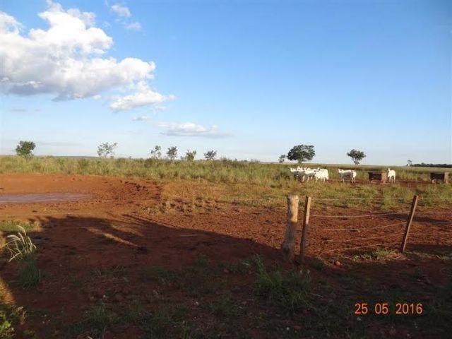 Fazenda c/ 1.700he c/ 80% formados, dupla aptidão, Itiquira-MT, pego 50% em imóvel no PR - Foto 9