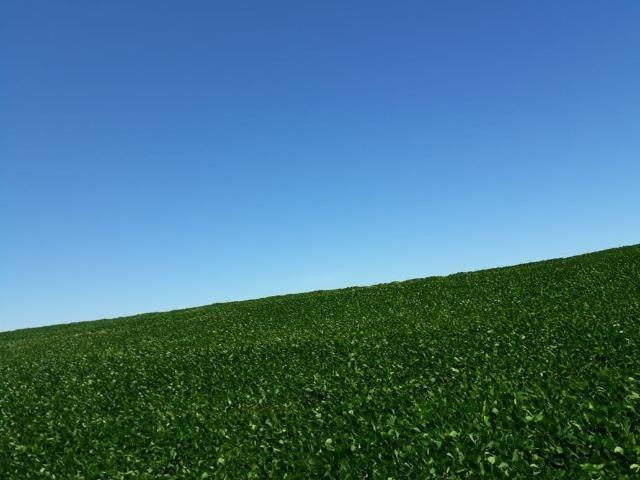 Fazenda c/ 620he, plantando em 200he, 240he em pastagens, Itiquira-MT - Foto 3