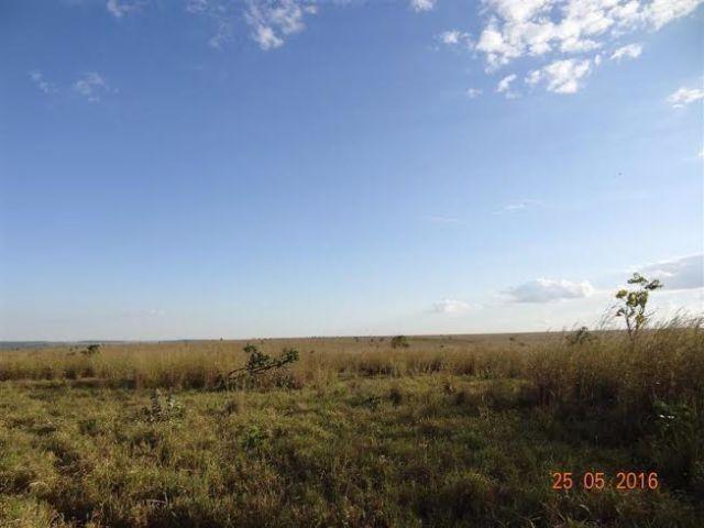 Fazenda c/ 1.700he c/ 80% formados, dupla aptidão, Itiquira-MT, pego 50% em imóvel no PR - Foto 11