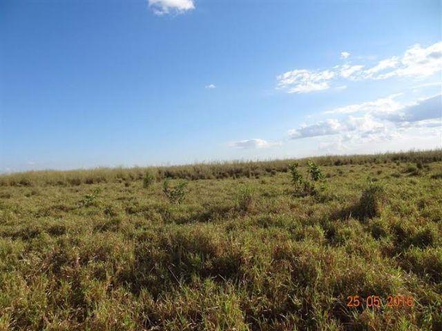 Fazenda c/ 1.700he c/ 80% formados, dupla aptidão, Itiquira-MT, pego 50% em imóvel no PR - Foto 6