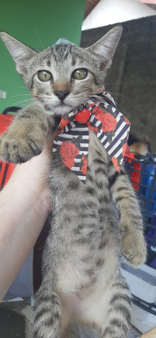 Adoção de gato filhote