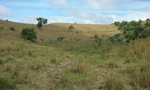 36 hectares na região pingo dagua - Foto 5