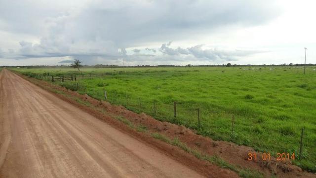 Fazenda c/ 4.500he, C/ 80% aberto, parte faz lavoura, Nova Xavantina-MT - Foto 4