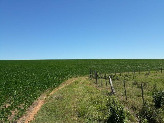 Fazenda c/ 620he, plantando em 200he, 240he em pastagens, Itiquira-MT - Foto 4