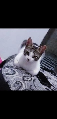 Gato para Doação - Foto 2