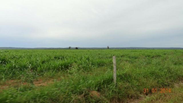 Fazenda c/ 4.500he, C/ 80% aberto, parte faz lavoura, Nova Xavantina-MT - Foto 5