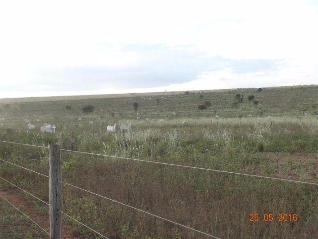 Fazenda c/ 1.700he c/ 80% formados, dupla aptidão, Itiquira-MT, pego 50% em imóvel no PR - Foto 10