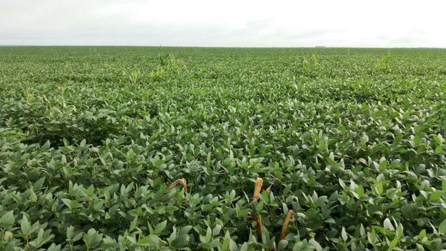 Fazenda 710 Hectares Plantando Lavoura - Ipiranga do Norte - MT - Foto 2