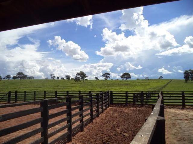 Fazenda c/ 3.480he c/ 80% formada, as margens da BR, Rondonópolis-MT - Foto 13