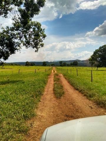 Fazenda com 686he, c/ 350He formado, terra boa, 30km antes Guiratinga-MT - Foto 12