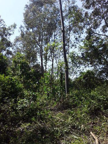 3 hectares arborizado,lugar tranquilo e seguro em Taquara - Foto 3