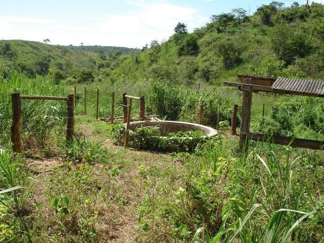 Fazenda 484 hectares em Governador Valadares/MG - Foto 9