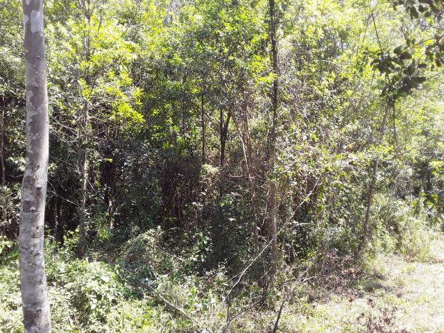 3 hectares arborizado,lugar tranquilo e seguro em Taquara - Foto 7