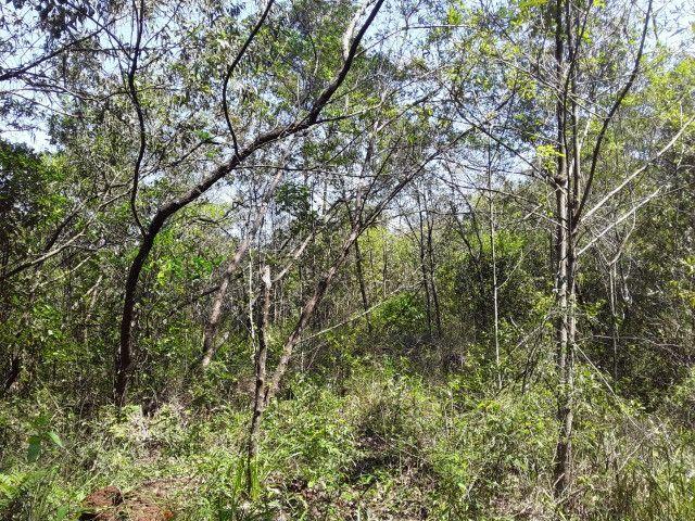 3 hectares arborizado,lugar tranquilo e seguro em Taquara - Foto 9