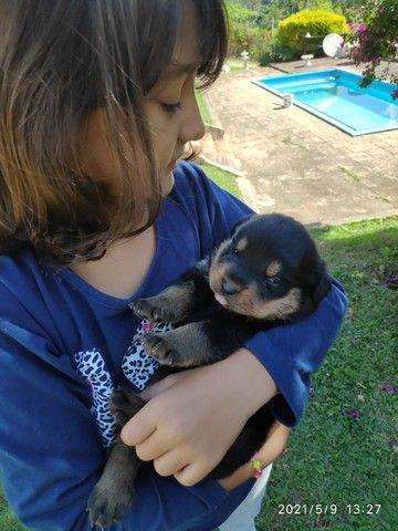 Filhotes de Rottweiler - Linhagem TOP!!  - Foto 2