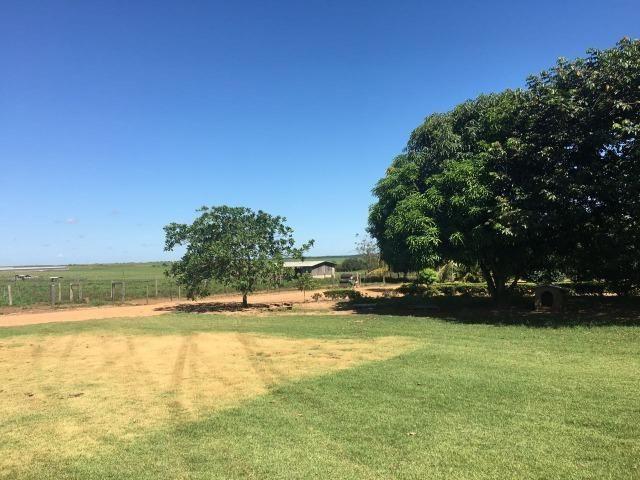 Granja com área de 40 hectares, localizada a 50 km de Lucas do Rio Verde - Foto 17