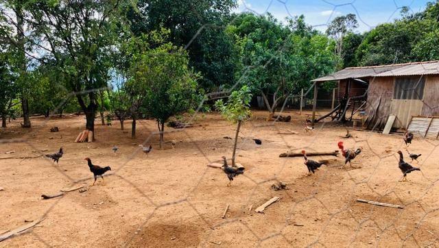 Samuel Pereira oferece: Linda chácara 4,2 hectares, Núcleo Rural Bom Sucesso regularizado - Foto 6