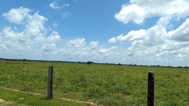Fazenda 1.028 Hectares Dupla Aptidão - Nova Guarita - MT - Foto 4
