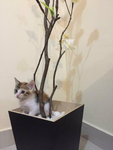 Adoção de Gatos - Foto 3