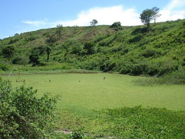 Fazenda 484 hectares em Governador Valadares/MG - Foto 8