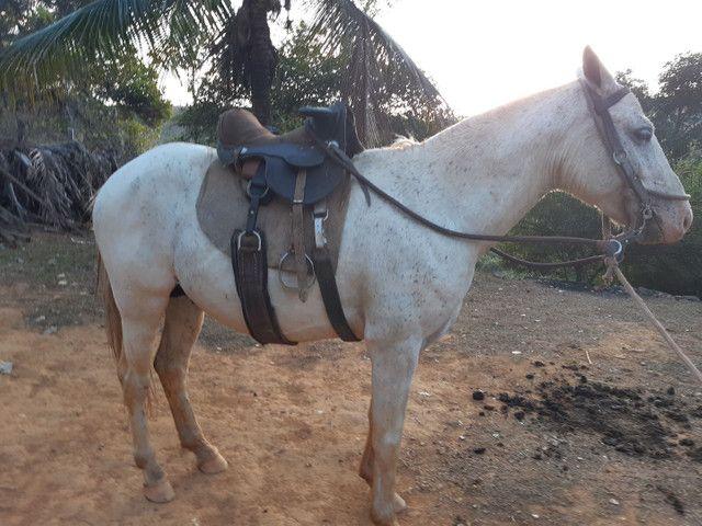 cavalo piquira e uma potra - Foto 2