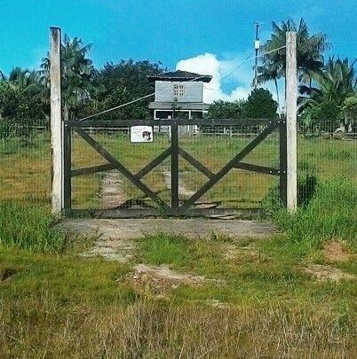 109B/Bela fazenda de 236 ha no Amapá com Açai natural