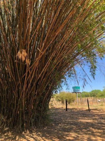 Fazenda - Paraíso do Tocantins/TO - Foto 6