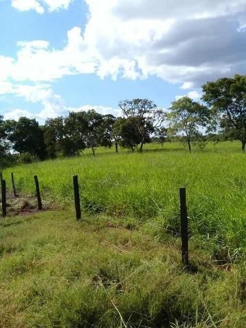 Fazenda 350,hectares beira do rio cuiaba - Foto 2