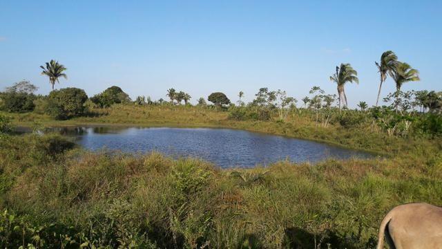 Vendo terreno com propriedade de 200m - Foto 3