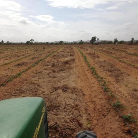 Fazenda no Bonfim - Foto 10