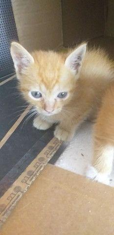 Gatinhos lindos - Foto 5