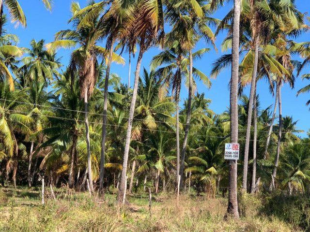 Vende-se lote na ilha de santa Rita