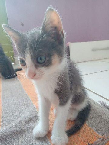 Gatinha para adoção  - Foto 5