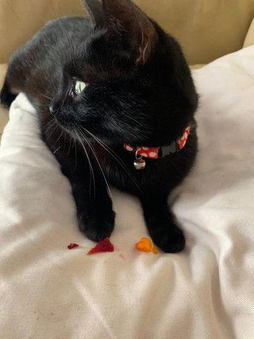Gato - Foto 4