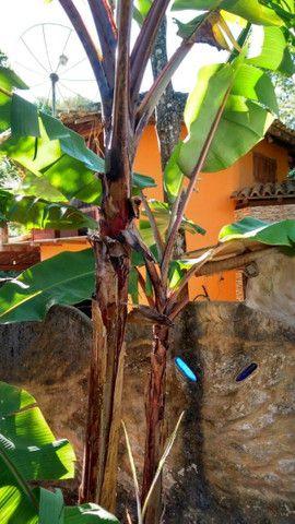 MG Casas Espetaculares. Duas no mesmo Lote em Arraial D' ajuda em Porto Seguro-BA - Foto 4