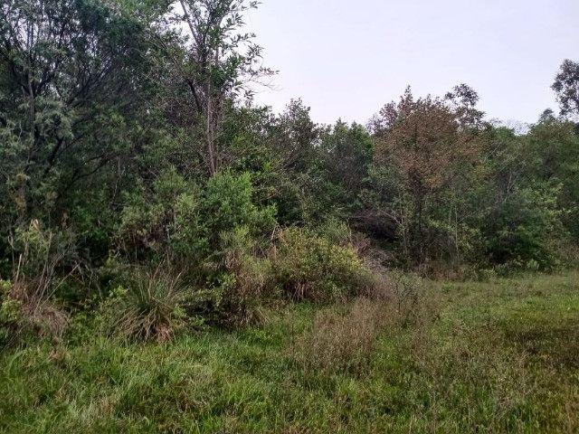 3 hectares arborizado,lugar tranquilo e seguro em Taquara