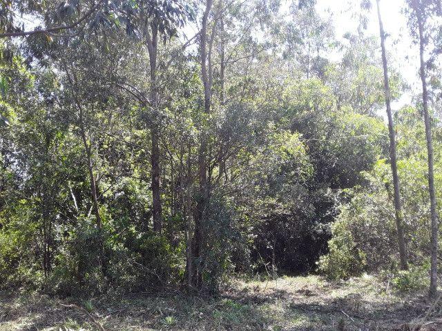 3 hectares arborizado,lugar tranquilo e seguro em Taquara - Foto 4